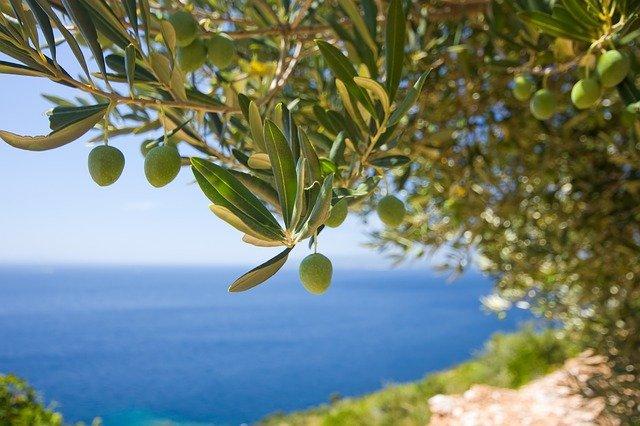olivovník na pláži