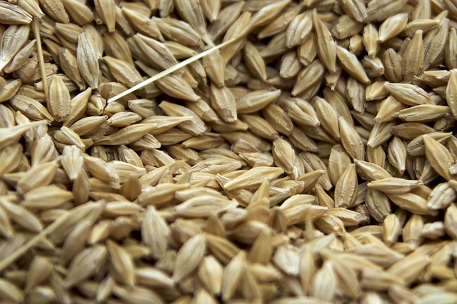 Obiloviny ve formě semínek.jpg