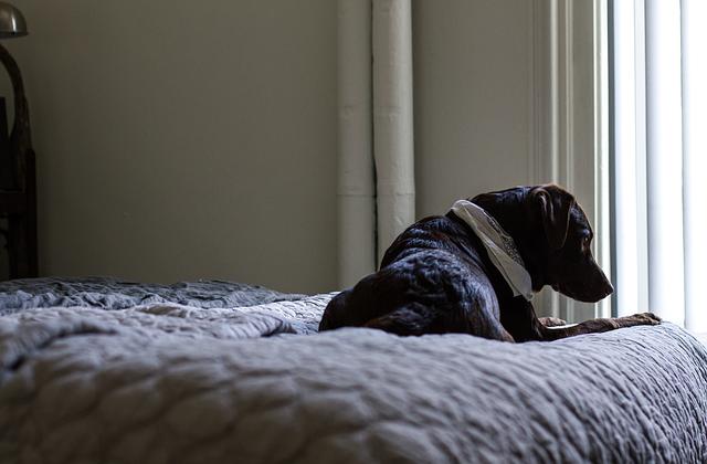pes na posteli v ložnici